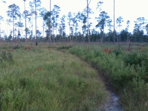 Highlands Hammock State Park - a path through the flats